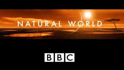 bbc на русском документальные фильмы смотреть онлайн